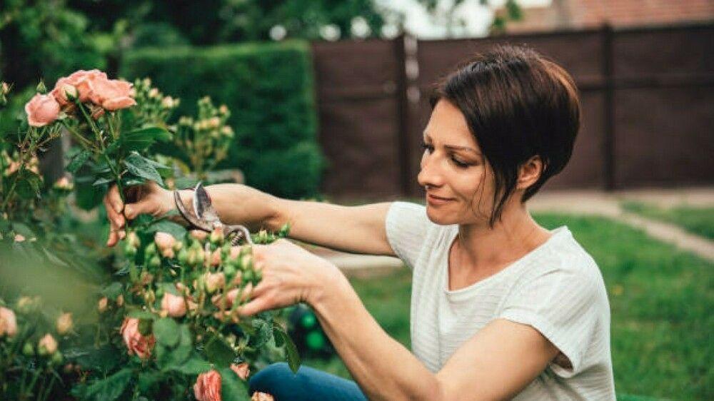 Mit diesen sechs Tipps werden Sie ein besserer Gärtner