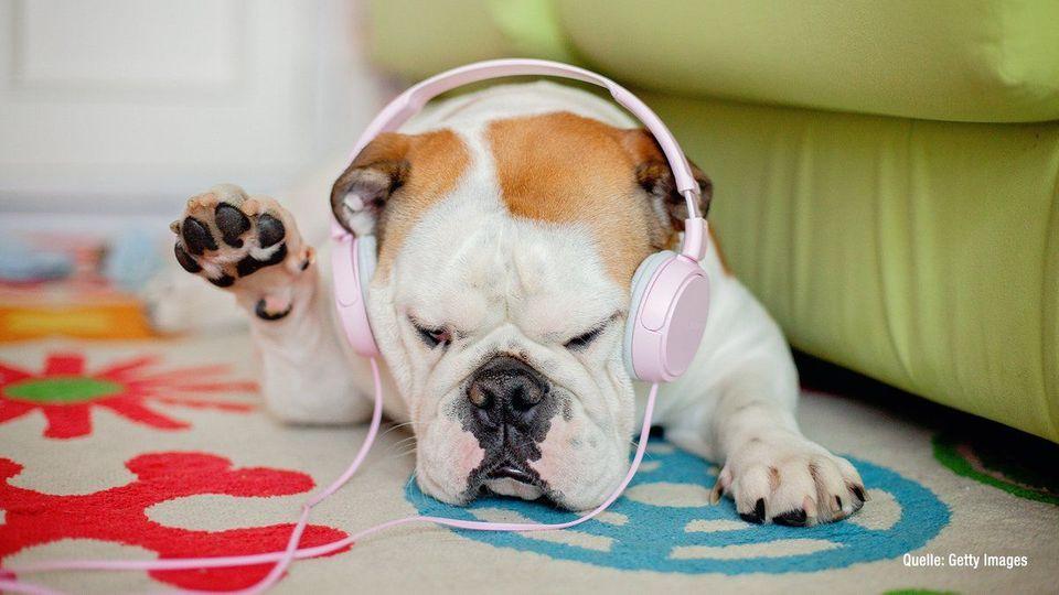 Really??? Playlisten für Haustiere bei Spotify
