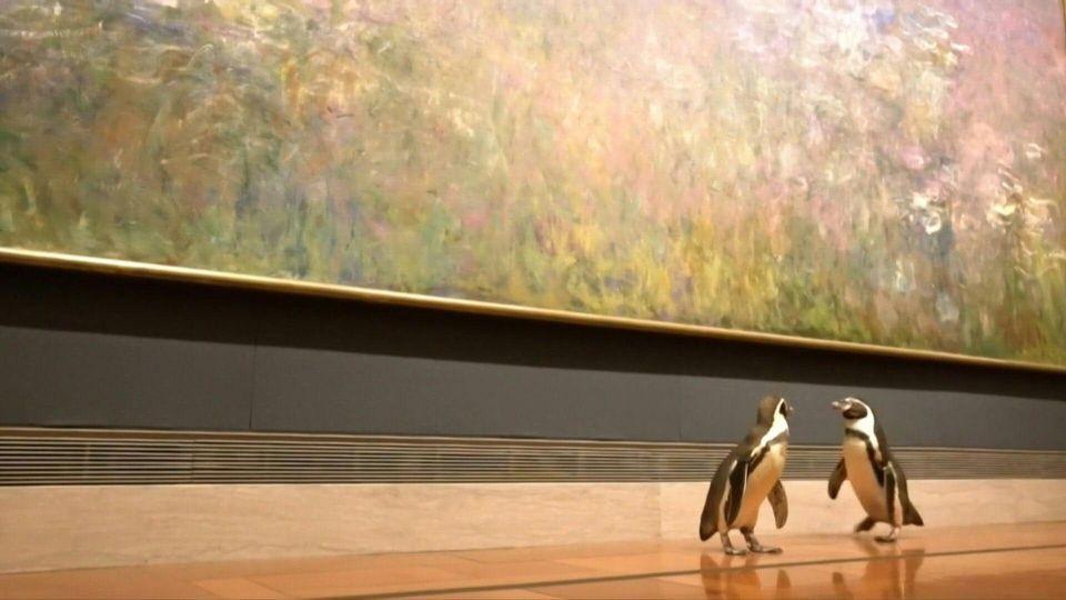 Pinguine bestaunen Kunst im Museum - danke, Corona!