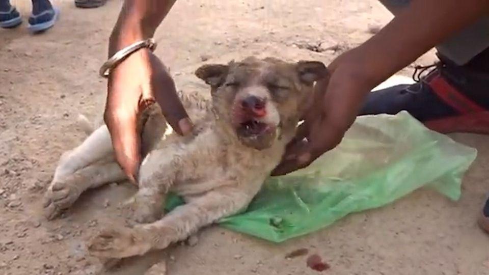 Herzerwärmend: Tierfreunde retten verletzten Hundewelpen