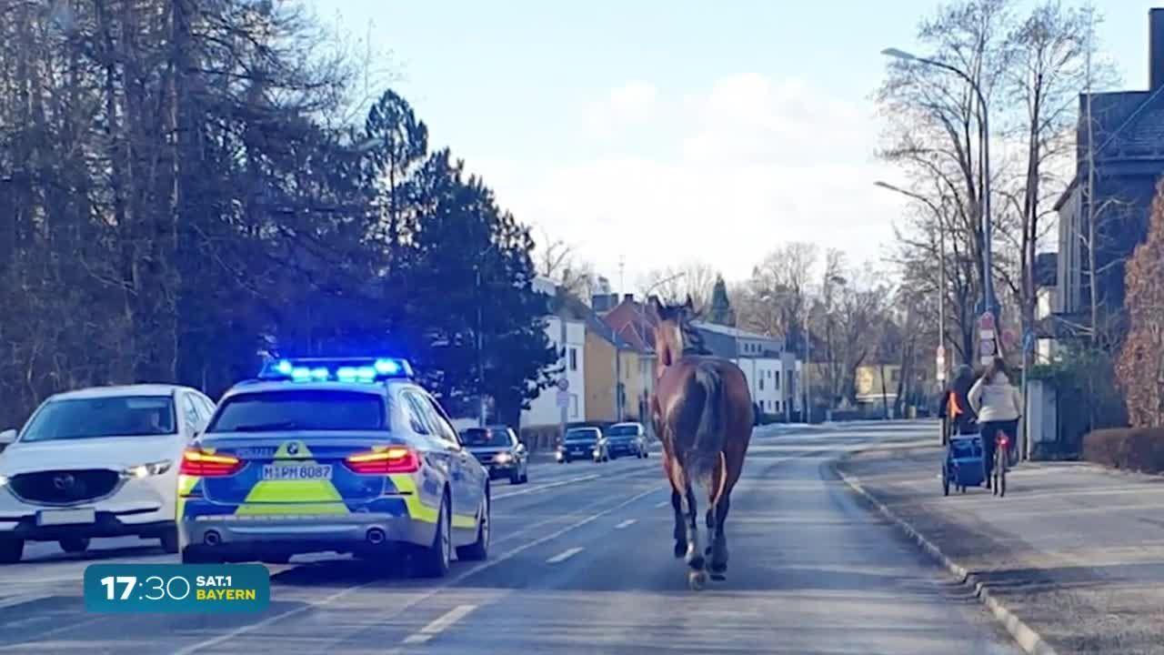 Pferd spaziert durch München: Polizei auf Verfolgungsjagd